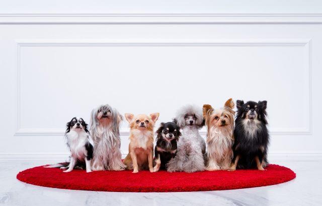 ペットと共生する家~犬・猫と暮らすセキスイハイムの家づくり