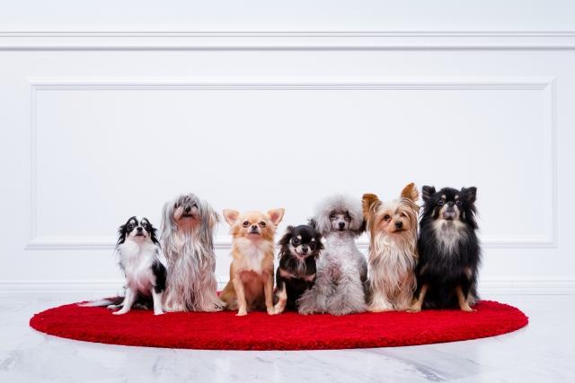 セキスイハイムのペット(犬猫)と共生する家