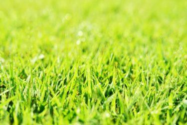 セキスイハイム天然芝の庭