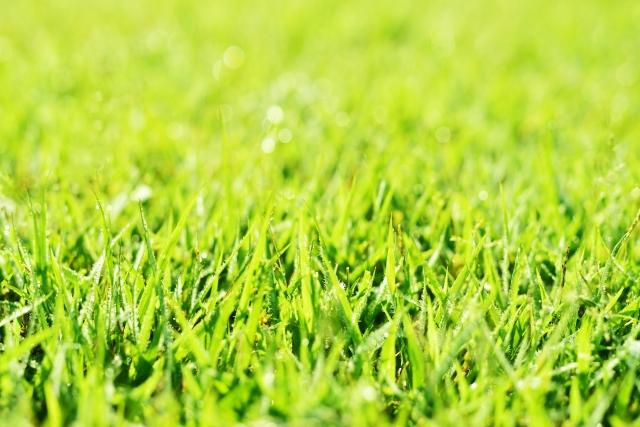 芝生セキスイハイム